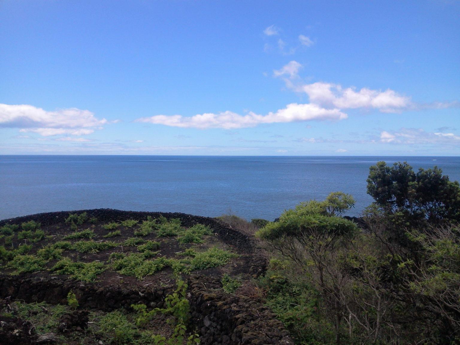 Ruin for sale pico island